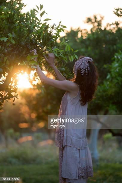 caucasian girl harvesting mandarins and oranges in organic farm - orange farm stock photos and pictures