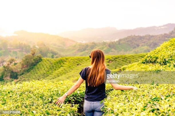 caucasian girl in a tea plantation during the sunset - tea leaves stock photos and pictures