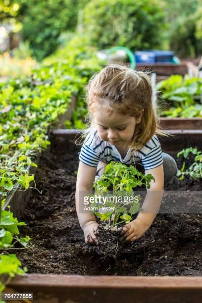caucasian girl planting in garden - jardin potager photos et images de collection