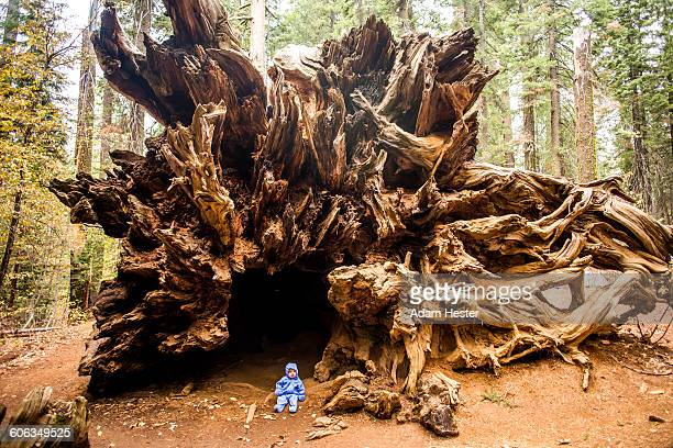 Caucasian girl sitting under ancient tree
