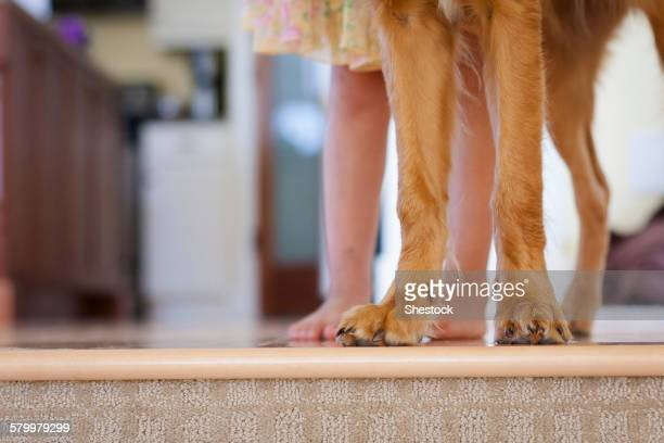 Caucasian girl standing with puppy at edge of step