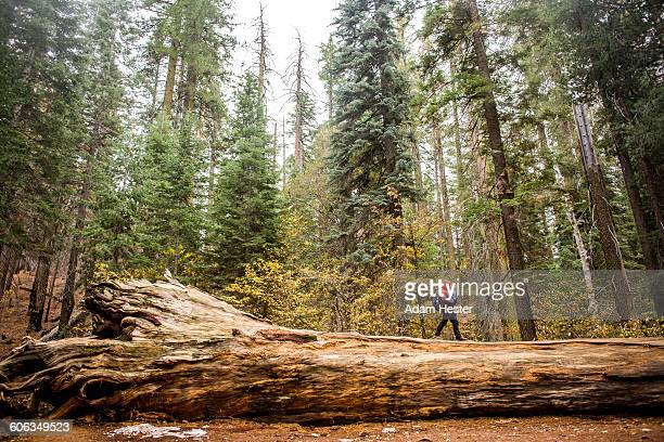 Caucasian girl walking in Yosemite National Park, California, United States