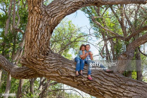 Caucasian girls hugging and sitting in tree