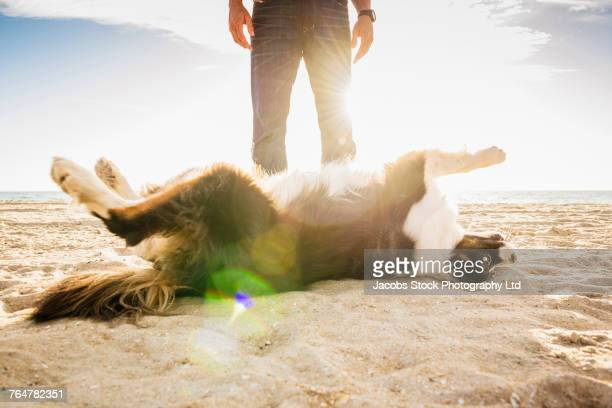 Caucasian man and dog playing at beach