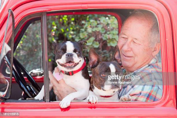 Caucasian man driving with dogs