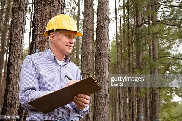 Caucasian man, hardhat. Forester, builder. Studying environmental conservation burned forest.
