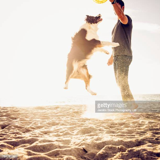 caucasian man playing with dog at beach - mammal stock pictures, royalty-free photos & images