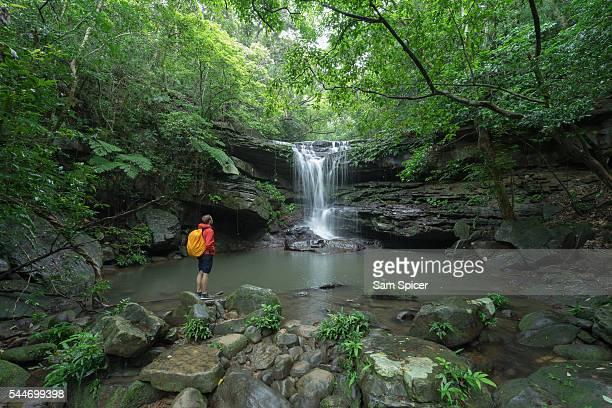 Caucasian man standing by idyllic Jungle waterfall, Iriomote Island
