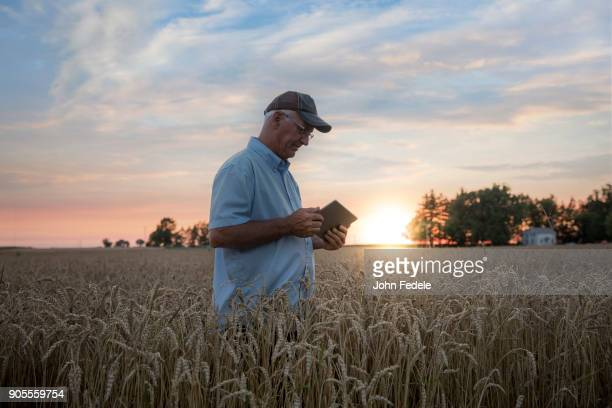 caucasian man using digital tablet in field of wheat - escena no urbana fotografías e imágenes de stock