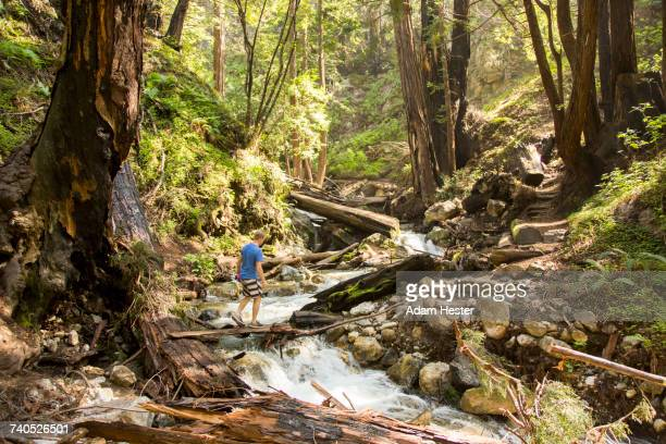 caucasian man walking on wooden plank over forest stream - oakland california stock pictures, royalty-free photos & images