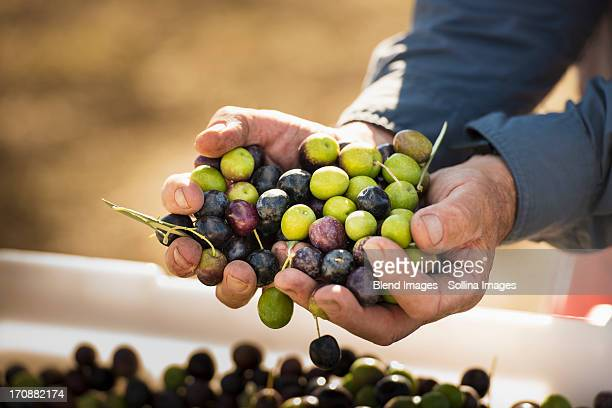 caucasian man with handful of olives - aceitunas fotografías e imágenes de stock