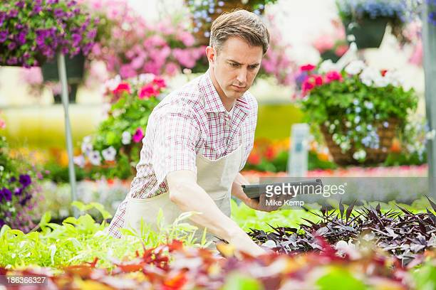 caucasian man working in plant nursery - orem utah stock pictures, royalty-free photos & images