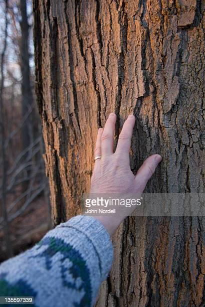 Caucasian mans hand touching tree bark