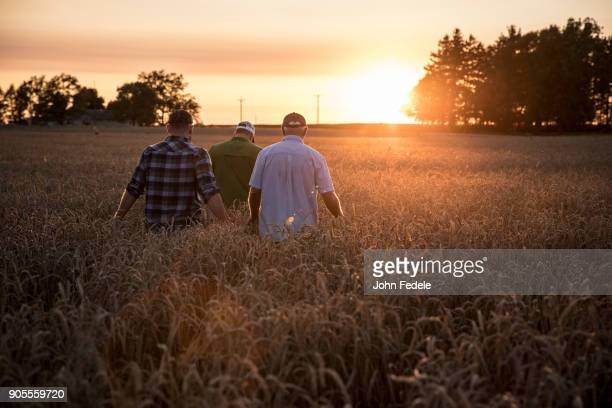 Caucasian men walking though field of wheat