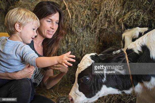 Caucasian mother and son petting cow in barn