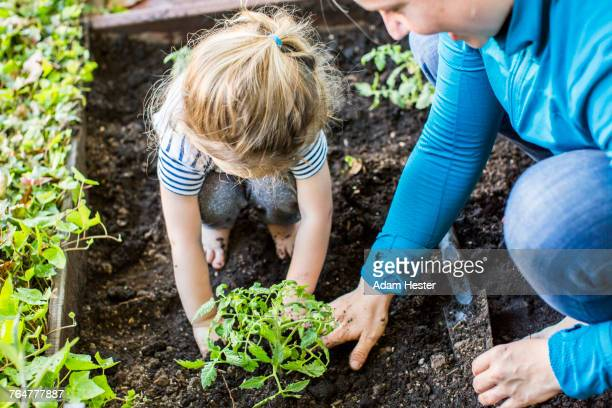 caucasian mother teaching gardening to daughter - tuinieren stockfoto's en -beelden