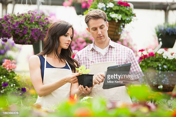 Caucasian people working in plant nursery