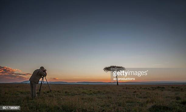 caucasian photographer photographing tree in savanna - night safari stock pictures, royalty-free photos & images