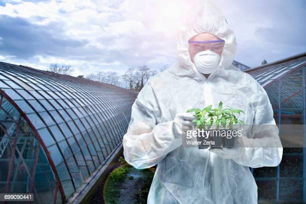 caucasian scientist wearing clean suit examining seedling - schutzanzug stock-fotos und bilder