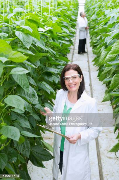 caucasian scientist working in greenhouse - geneticist stock pictures, royalty-free photos & images