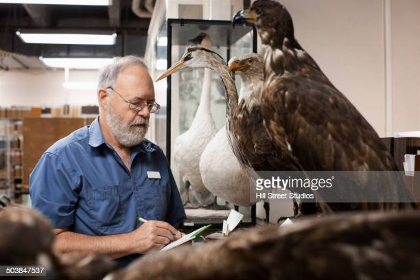 Caucasian scientist working in natural history museum
