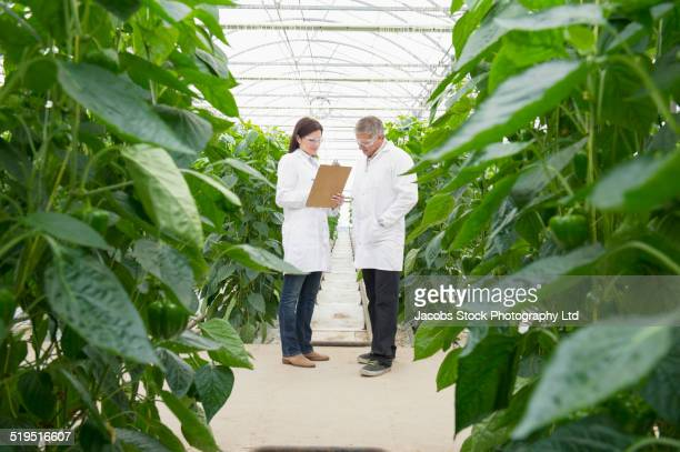 caucasian scientists talking in greenhouse - geneticist stock pictures, royalty-free photos & images