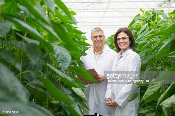 caucasian scientists working in greenhouse - geneticist stock pictures, royalty-free photos & images