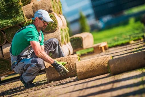 Caucasian Turf Grass Installer 1053179542