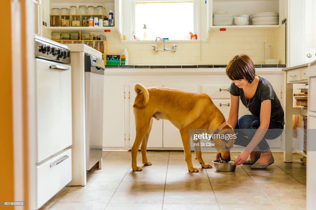 Caucasian woman feeding dog in kitchen : Stock Photo