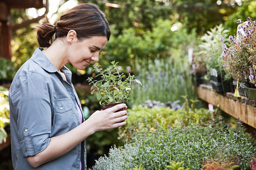 Caucasian woman holding a small plant, an aromatic herb and smelling it, shopping at a garden centre nursery. - gettyimageskorea