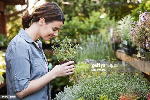Caucasian woman holding a small plant, an aromatic herb and smelling it, shopping at a garden centre nursery.