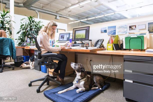 Caucasian woman in office with dog