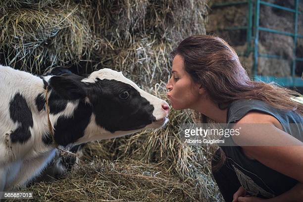 Caucasian woman kissing cow in barn
