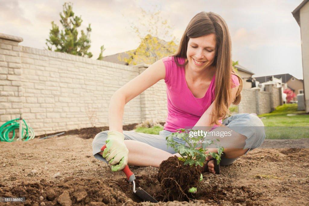 Caucasian woman planting in backyard : Stock Photo