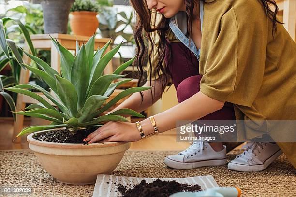 caucasian woman planting potted plant - potting stock pictures, royalty-free photos & images