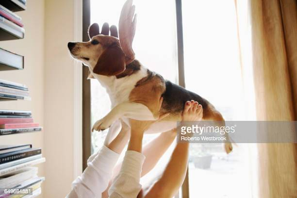 Caucasian woman playing with dog in reindeer horns