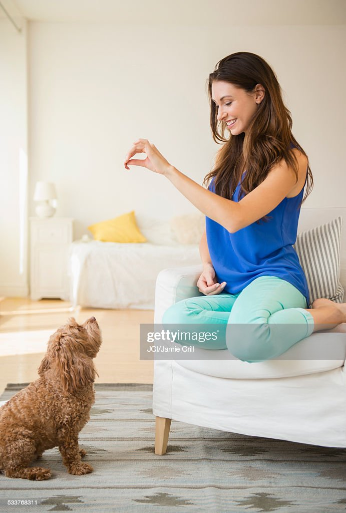 Caucasian woman training pet dog in living room : Foto stock