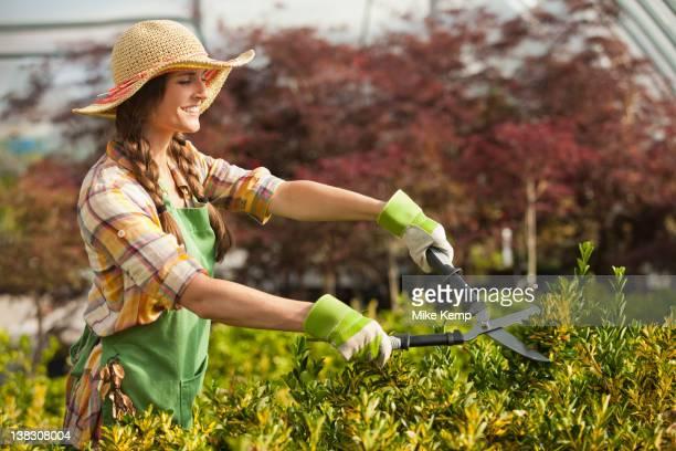 Caucasian woman trimming bush in plant nursery