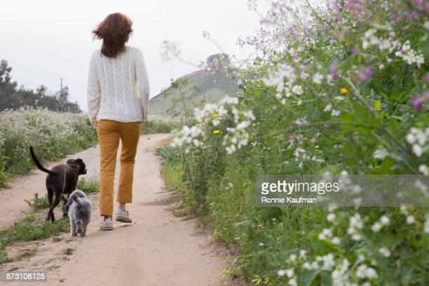 Caucasian woman walking dogs on dirt path