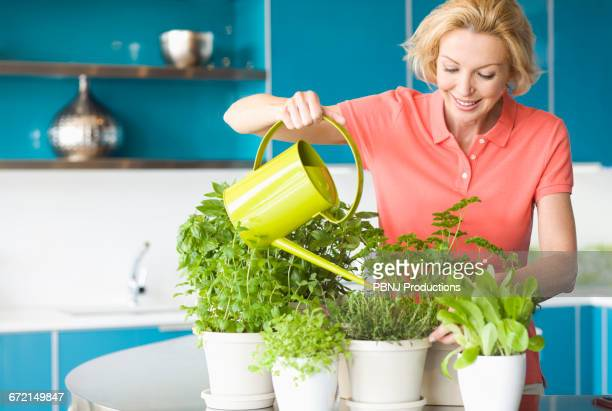 caucasian woman watering plants in kitchen - herbs stock photos and pictures