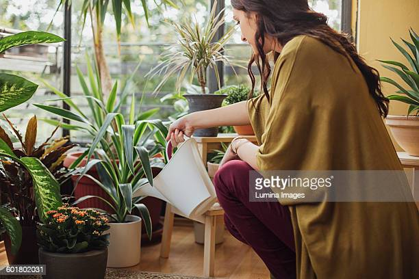 caucasian woman watering potted plants - watering stock pictures, royalty-free photos & images