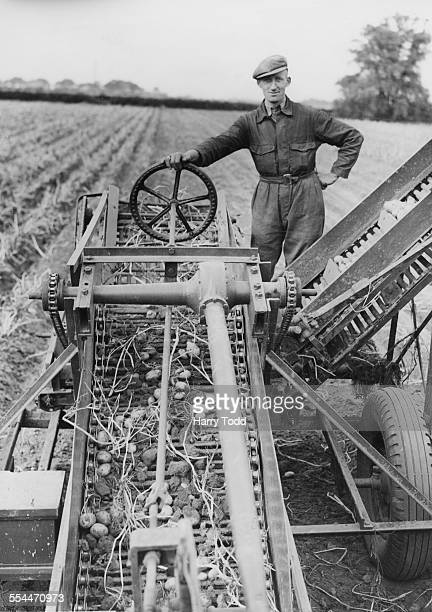 A Caudwell Mechanical Potato Picker in use on a farm at Holbeach Lincolnshire 27th September 1943 The picture shows the chaindriven conveyor belt...