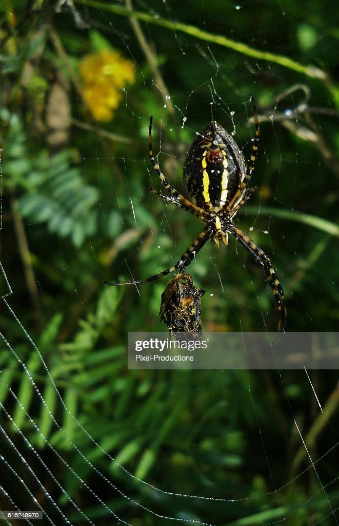 Caught In A Deadly Web : Stock Photo