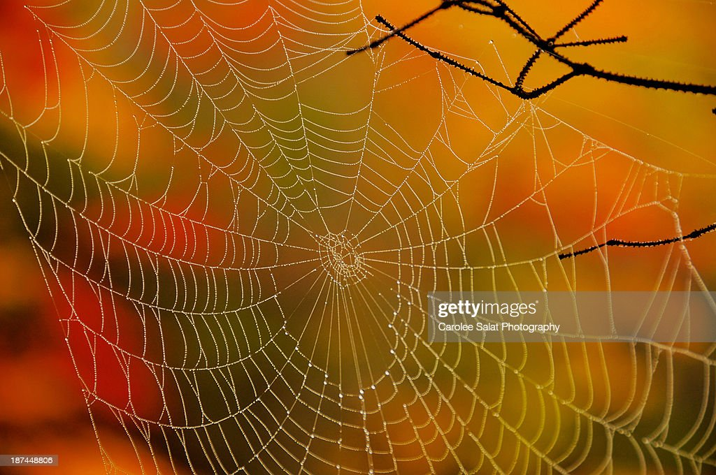 Caught in the Colors of Fall : Stock Photo