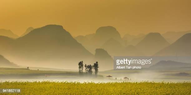 cauliflower field landscape of china - provinz yunnan stock-fotos und bilder