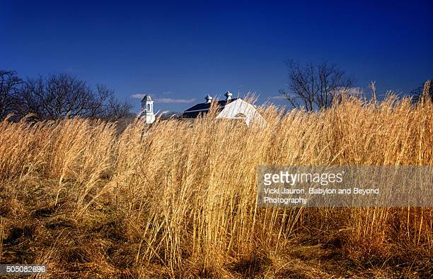 caumsett state park building through the grass - huntington suffolk county new york state stock pictures, royalty-free photos & images
