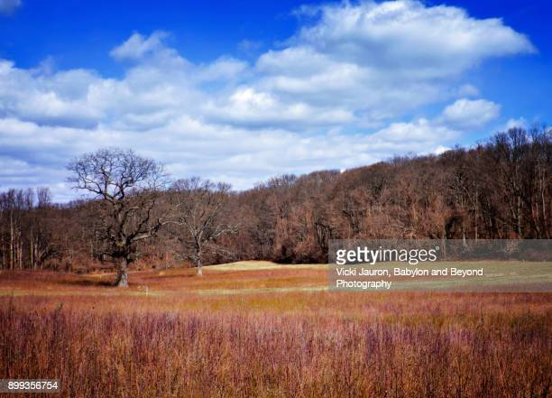 caumsett state park in winter - huntington suffolk county new york state stock pictures, royalty-free photos & images