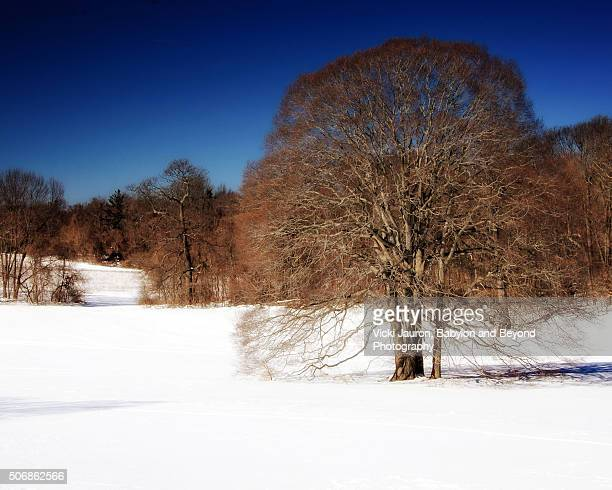 caumsett state park tree in the snow - huntington suffolk county new york state stock pictures, royalty-free photos & images