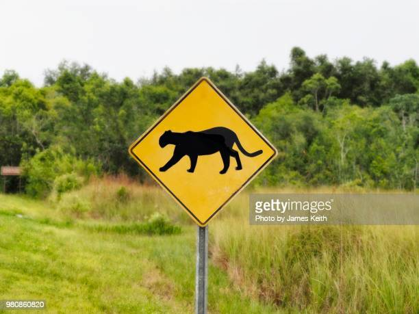 caution! panther crossing.  street signs warning drivers to slow down for wildlife and loose stock are rather common nationwide but those with the silhouette of a panther are a rarity except for south florida. - animal crossing stock pictures, royalty-free photos & images
