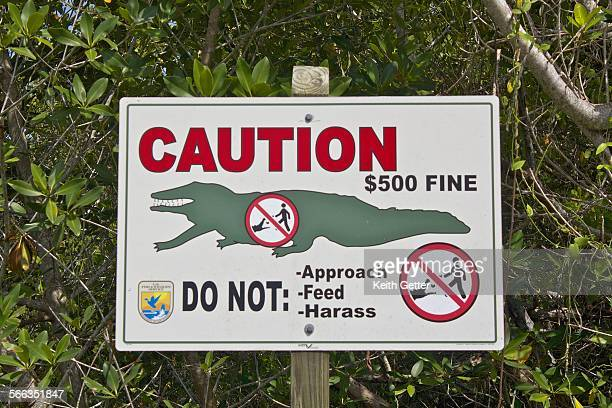 A 'Caution' sign on the side of a road at the JN Darling National Wildlife Refuge on Sanibel Island Florida USA July 25 2012